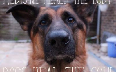 Dogs – healers of souls, perfect hairy stress relievers