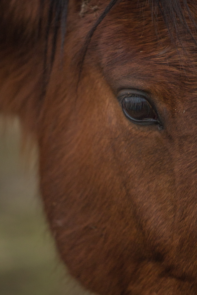 Horse-64